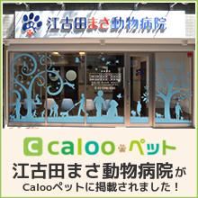 江古田まさ動物病院がCalooペットに掲載されました