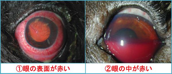 眼が赤い①